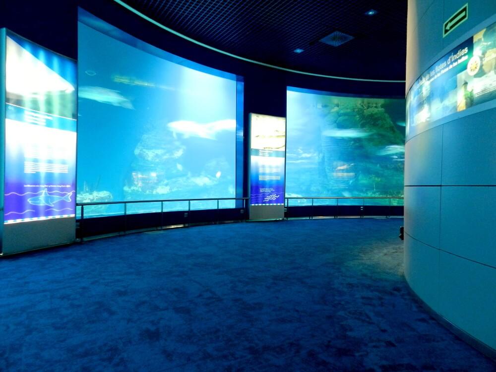 Oceanogr fic valencia comon for Oceanografic valencia precio 2016